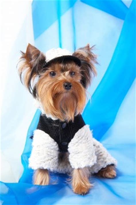 pattern for yorkie clothes finding free crochet patterns for pet clothes