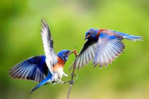 birds pictures 5 reasons you should care about migratory birds from the