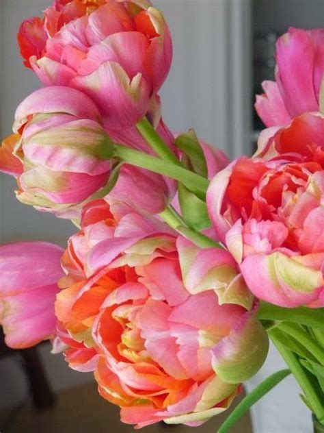 peonies and orange blossoms designing tabulous design the precious peony
