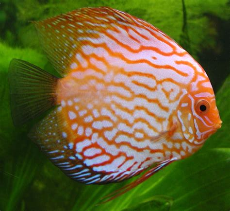 freshwater fish funny pictures gallery types of fish freshwater fish