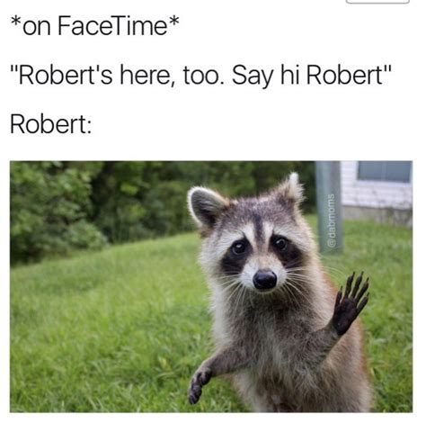 Excellent Raccoon Meme - raccoon excellent meme 100 images the best hairless