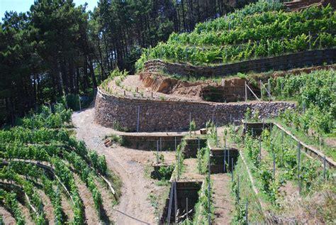 terrazzamenti liguri viti e vita verment ing di bonassola