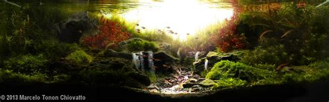 The Best Aquascape by 2013 Aga Aquascaping Contest 57