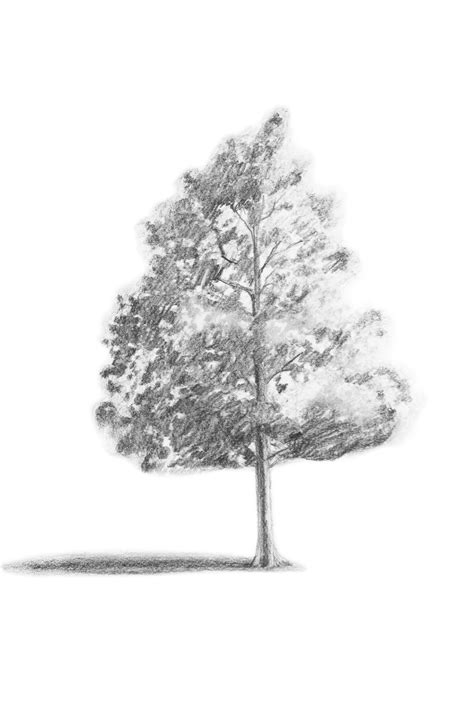simple drawing tree branching out learn how to draw a realistic tree