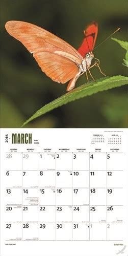 Cat Calendar 2018 Marks And Spencer Butterflies Calendars 2018 On Abposters