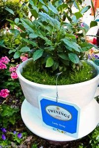 Tea Cup Planters For Sale by 1000 Images About Teacup Teapot Planters On