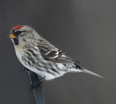 slide show the birds of winter in new england