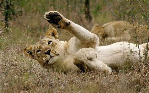 animals waving goodbye     eyes    briffme