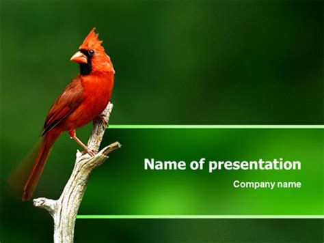 powerpoint themes birds cardinal indiana state bird powerpoint template