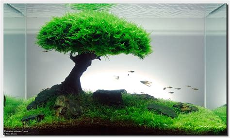 cool fish tanks live plants aquascape of the month