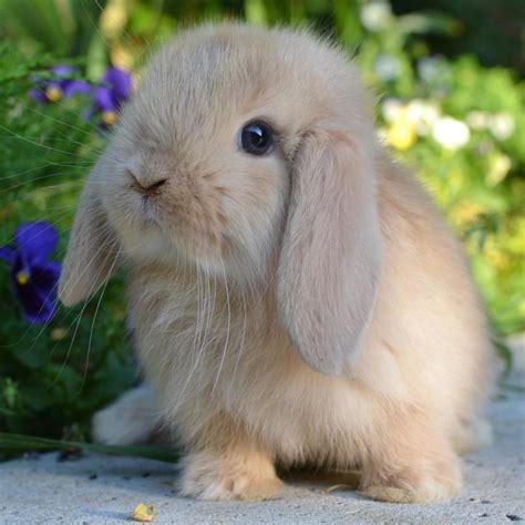 alimentazione conigli nani senza categoria la stalla dei conigli allevamento e