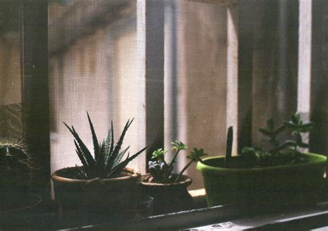 una finestra sul cortile flickr week r una finestra sul cortile frizzifrizzi