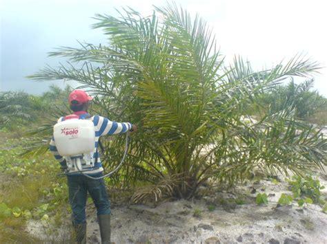 Pupuk Majemuk Kelapa Sawit pertanyaan seputar kelapa sawit petaniku dan nasa