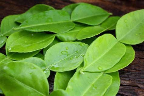 what s a good kaffir lime leaves substitute spiceography