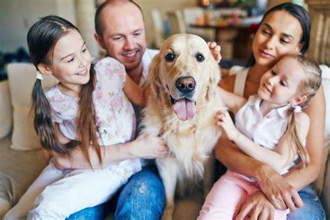 keeping  home clean   pet dog rubandscrub