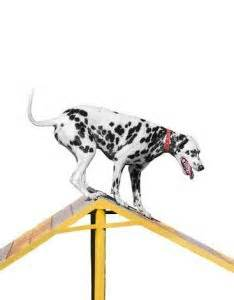 how to start agility for dogs agility competitions how to start science on risks pros cons