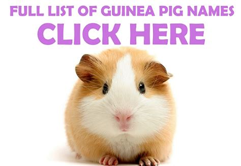 cool guinea pig names images