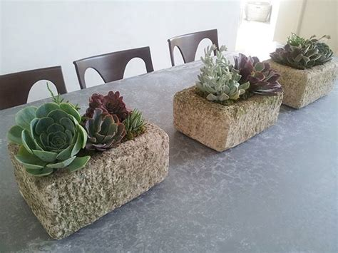 Home Interior Design Services Succulent Plant Design Succulents For Home Amp Office