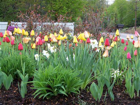 Bulb Garden Ideas Inspiring Bulb Garden Design Garden Design 20