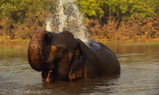 elephant biography in hindi indian elephant species wwf