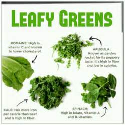 Leaf Eating Garden Pests - what garden pests eat lettuce gardens a well and diabetes