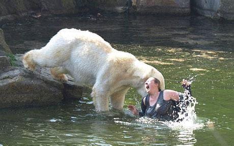 Animal Planet World S Most Dangerous Animals polar bears are among the most dangerous animals in the world