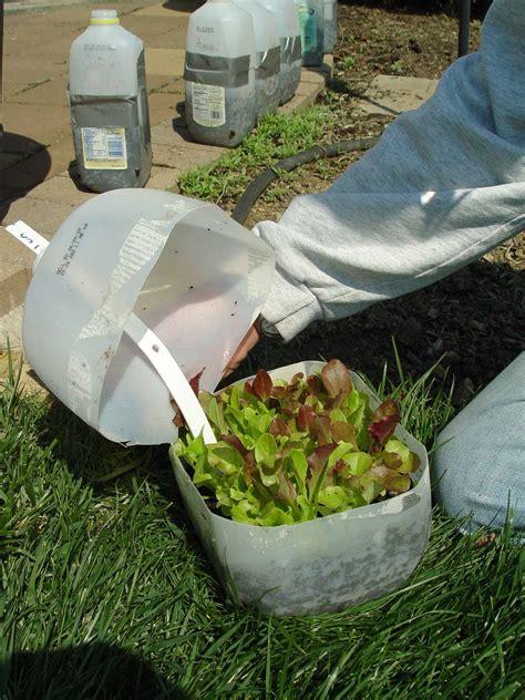 winter sowing seeds garden housecalls