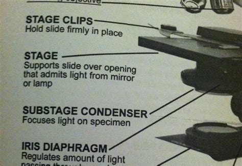 what part of the microscope regulates the amount of light parts of a compound microscope at parkland studyblue