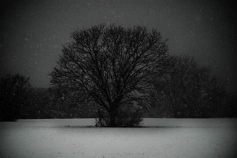 black snow black snow tree photograph by sonja quintero