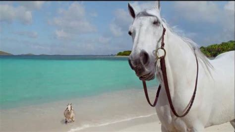 directv tv spot hannah davis and her horse bath directv tv spot hannah davis and her goat ispot tv