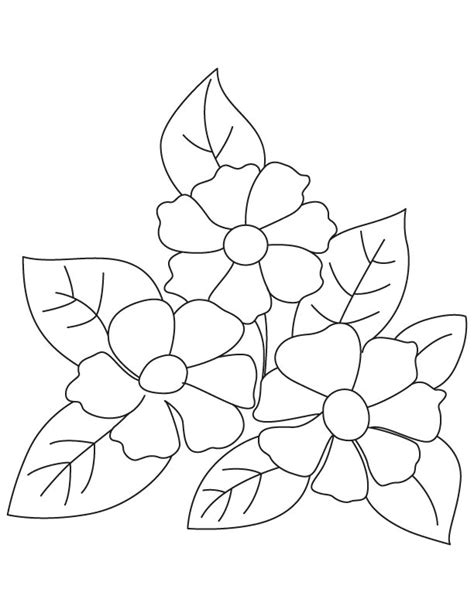 camellia flower coloring page small camellia flowers coloring page download free small