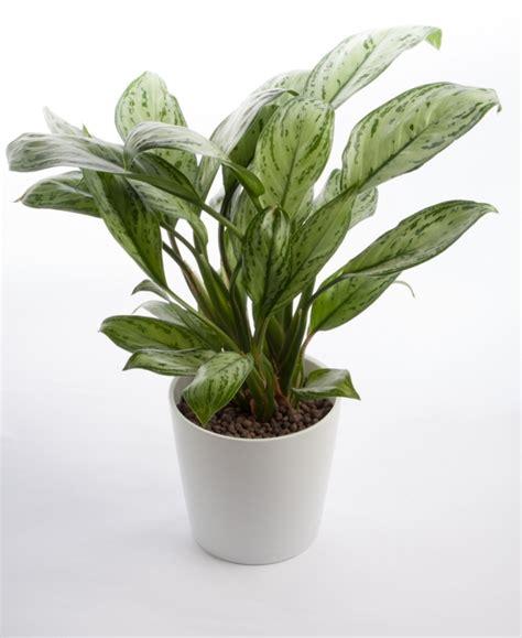 good houseplants 10 easy houseplants anyone can grow thegoodstuff
