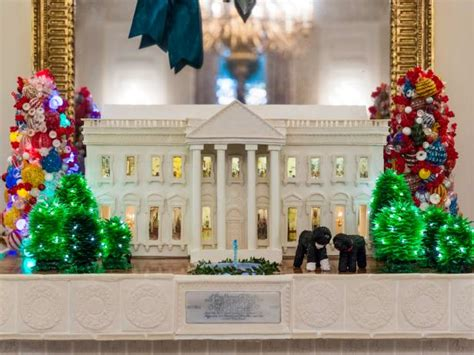first dog in the white house white house christmas first dog bo white house christmas 2014 hgtv