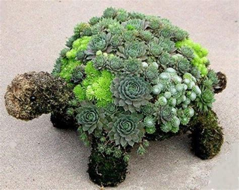 hens and chicks plant varieties plants and gardening