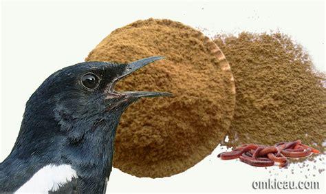 Obat Cacing Untuk Burung membuat tepung cacing tanah sebagai ef alternatif untuk