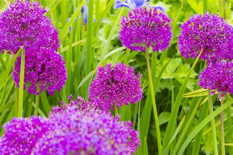 fiore botanica immagini natura prato fiore erba botanica