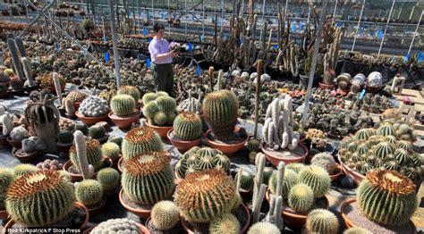 biggest online plants store britain s biggest cactus grower in sales spike as hosepipe