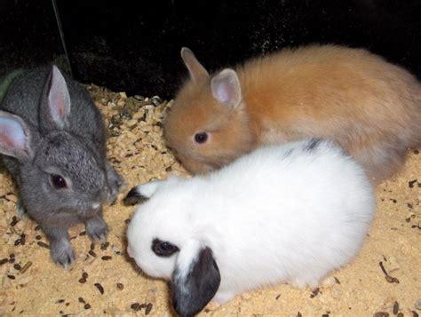 imagenes de animales vertebrados mamiferos fotos de mam 237 feros