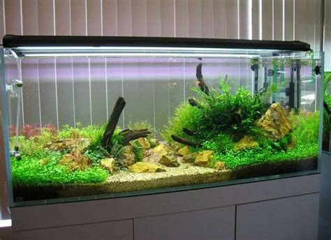 ghiaia acquario dolce acquario dove posizionarlo hobbydicasa hobbydicasa