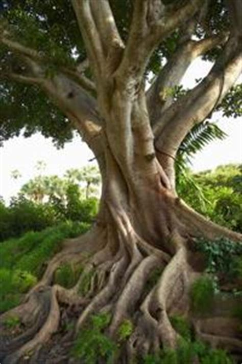 alberi per piccoli giardini alberi rapida crescita per piccoli giardini russelmobley