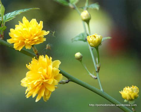 sfondo desktop fiori sfondi desktop fiori