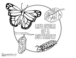 butterfly stages coloring pages butterfly clipart coloring worksheets