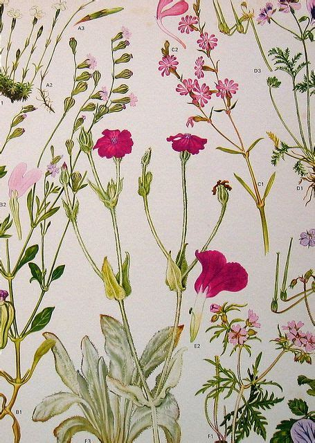 watercolor botanical pattern 507 best images about botanical art on pinterest