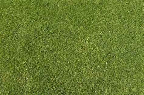 pattern photoshop grass grass ground texture en yeniler en iyiler 金