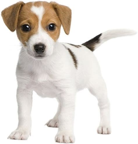 spa city puppies dogs hd picture free stock photos 5 059 free stock photos for