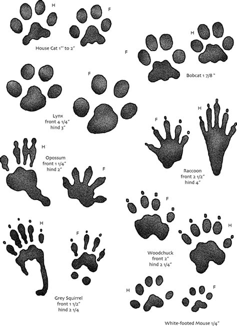 printable animal tracks identification opinions on animal track