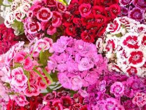 summer flowers wallpapers beautiful flowers wallpapers