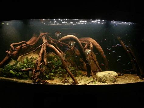 American Aquascapes by Sa Biotope 8 Aquascaping 8 And Sa