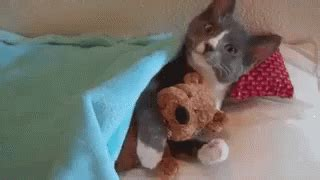 bed gif good night kitten gif bed kitten cat gifs say more