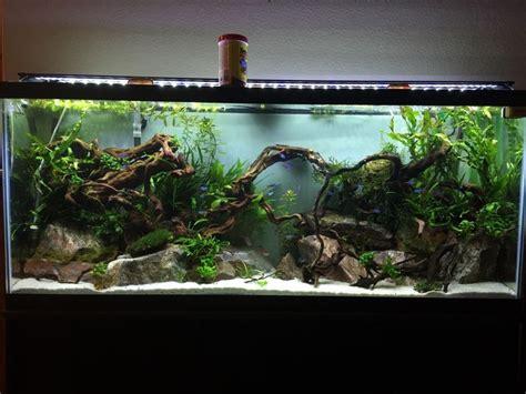 Setting Aquascape by 13393 Best Aquascape Images On Plants Candies